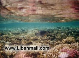 under water photos by Najy Cherabieh